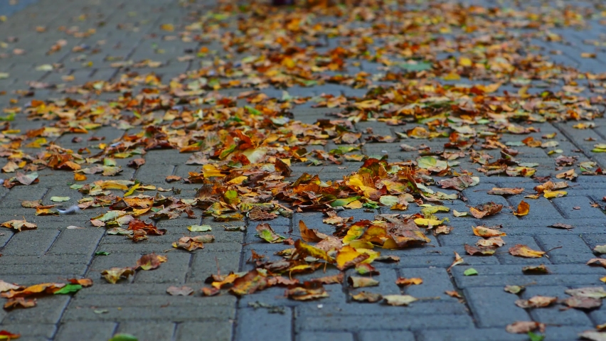 Female legs in boots on autumn leaves | Shutterstock HD Video #1059189542