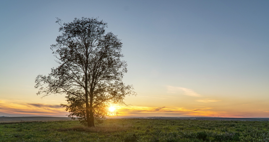 Hyperlapse around a lonely tree in a field during sunset, beautiful time lapse, autumn landscape   Shutterstock HD Video #1059192008