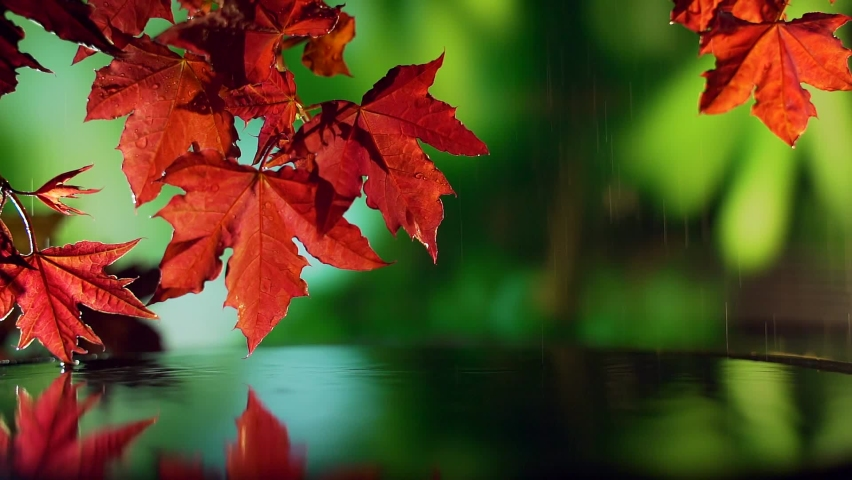 Close up of red autumn maple leaves over water on green background. Rain drops fall into the water. reflection of a branch a lake in nature. spray slow motion. relaxation peace and quiet. Meditation | Shutterstock HD Video #1059199886