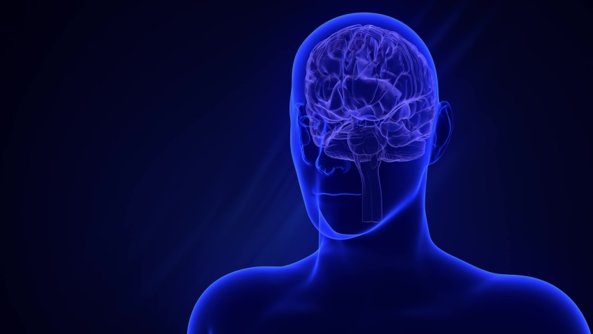 Visualization of parts of the brain, each separately. Orange glow. Transparent x-ray of a silhouette of a man on a blue background. Abstract digital human brain. Neural network. 3D animation   Shutterstock HD Video #1059200279