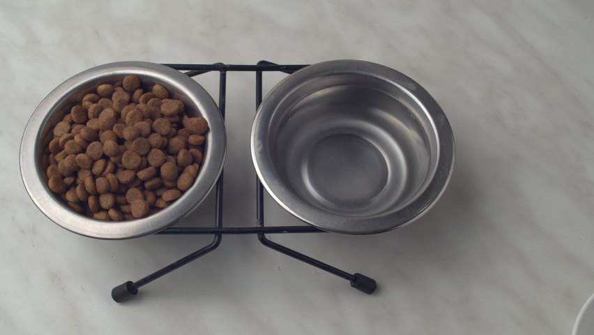 4K macro of the healthy dry food for dog or cat in plates sliding camera. Dry Pet Food. Nutrition for Cats and Dogs. ProRes 422 | Shutterstock HD Video #1059201179