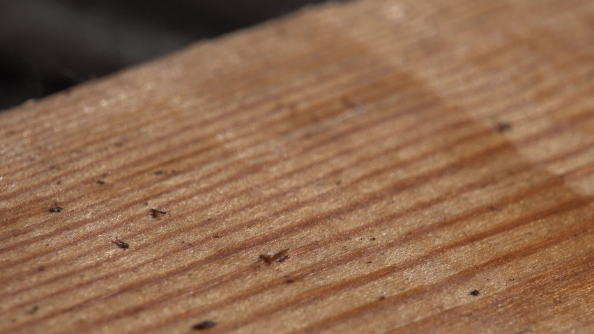 Closeup view. man hand tighten put a wood screw into a wooden board using a screwdriver. | Shutterstock HD Video #1059201467