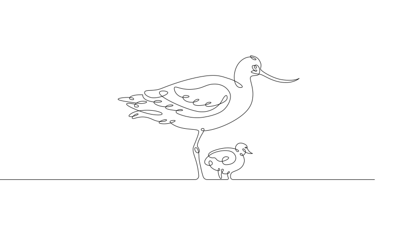 Self line drawing animation of one continuous drawing line heron bird standing in a swamp  .Black lines on white background.