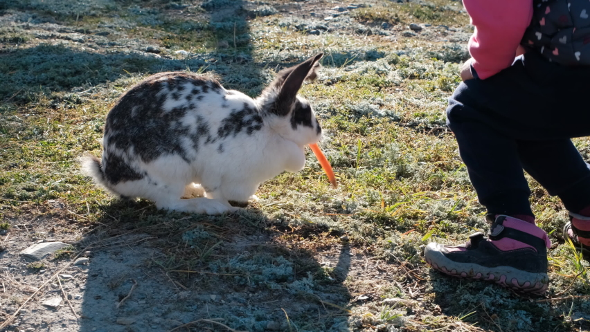 Little Girl Feeding Rabbit with a Carrot in a Farm. Slow Motion. Harmony with Nature, Ecology, Pets and Animals Concept | Shutterstock HD Video #1059242564