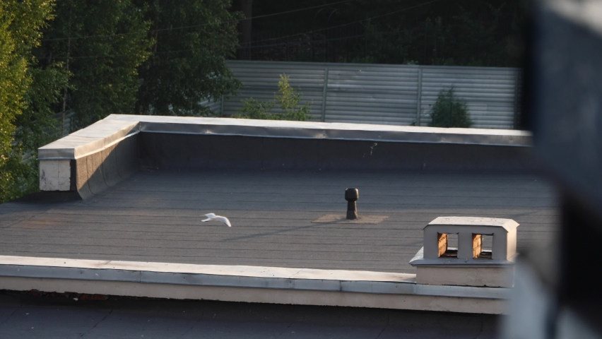 A flock of seagulls flew to the roof of the building   Shutterstock HD Video #1059245999