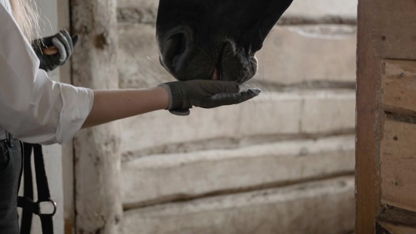 A girl in a white shirt and gloves puts a bridle on a horse | Shutterstock HD Video #1059246137
