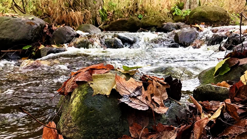 The accelerated Water cascade in rivulet with rocks. The detailed look at colorful leaves on rocks in autumn creek.  | Shutterstock HD Video #1059252839