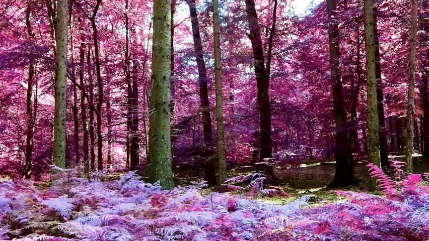 Infrared panoramic view into a pink and purple forest landscape | Shutterstock HD Video #1059256076