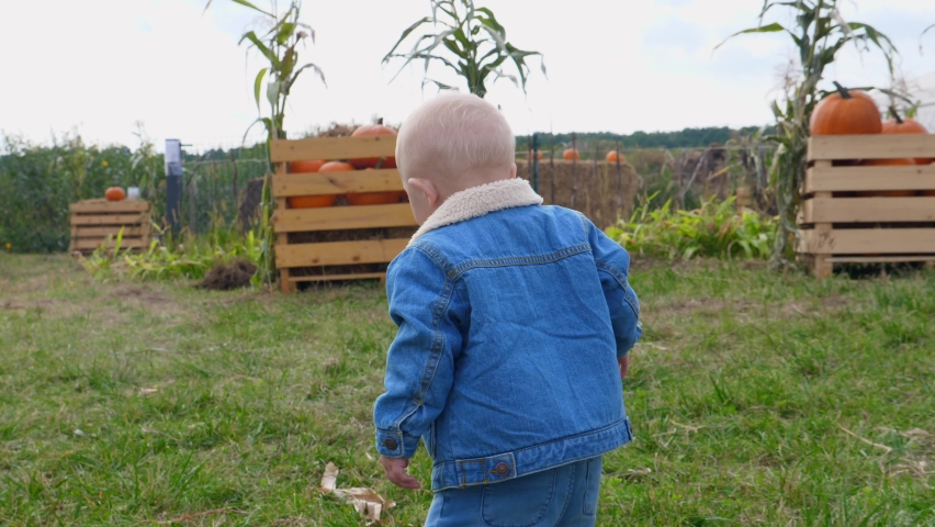 Back view of baby walking in the pumpkin patch among corn maze and wooden boxes with pumpkins. First trip to pumpkin patch | Shutterstock HD Video #1059266030