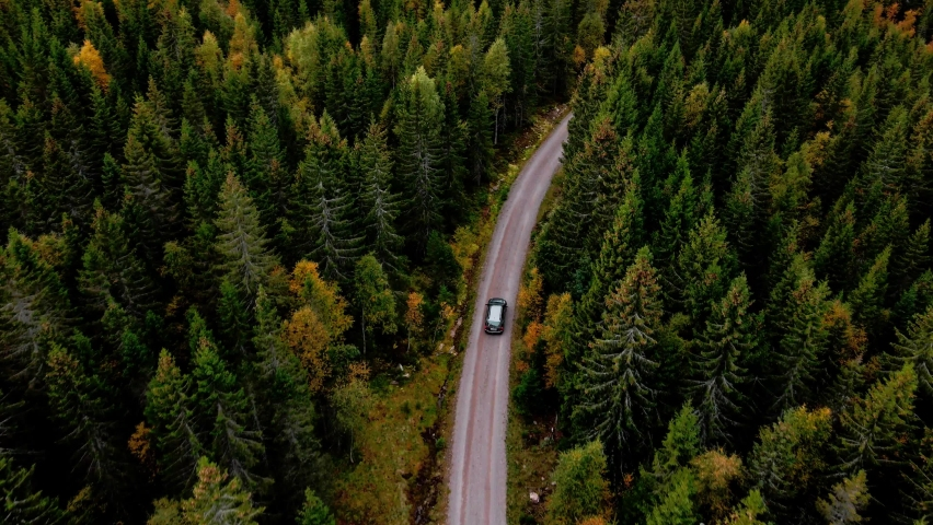 Car driving along a dirt road in a dense pine forest. Arial follow footage 4K. Royalty-Free Stock Footage #1059308711