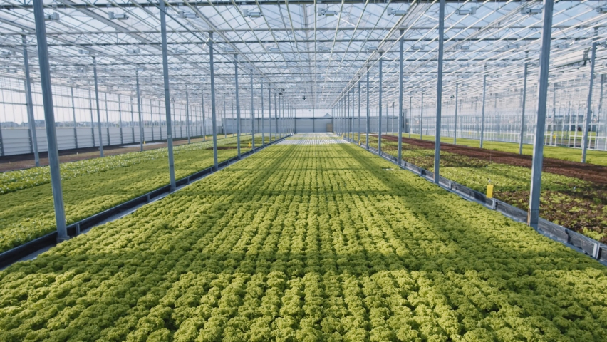 Greenhouse farm. Futuristic engineering. Two workers inspecting cultivating eco organic green plantations. Artificial intelligence scanning crops. For animation. Technology. | Shutterstock HD Video #1059357407