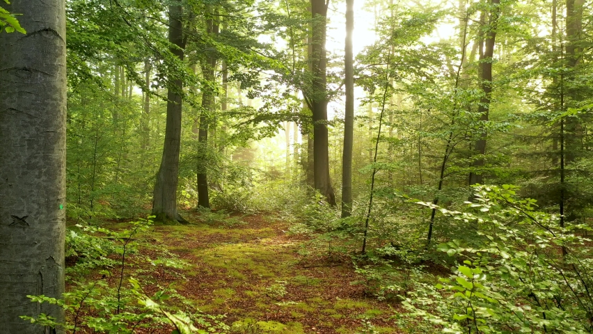Beautiful morning in green forest - aerial shot | Shutterstock HD Video #1059449279
