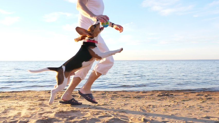 Playful young dog run with owner by beach, jump and try to catch toy. Man tease puppy, raise hand up and pet miss. Funny drop ears fly in air, slow motion shot of happy two Royalty-Free Stock Footage #1059481982