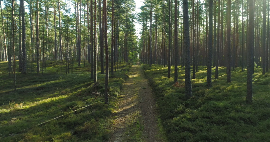 Hiking trail walking path in wild green pine forest moving backwards | Shutterstock HD Video #1059503930