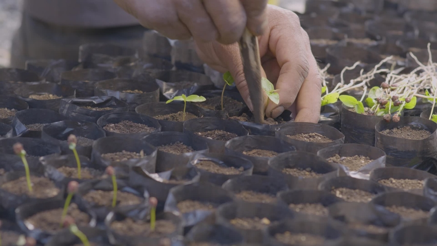 Hands plant small plants in the nursery for forest or food production. Hands reforesting, plant production nursery planting food or trees. Royalty-Free Stock Footage #1059527651