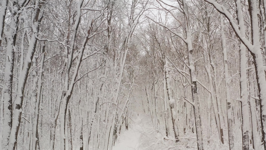 Birch forest in the snow. getting through winter forest trees. Inside there is a winter forest with snow-covered trees. Fairy forest with snow on the trees. Royalty-Free Stock Footage #1059532727