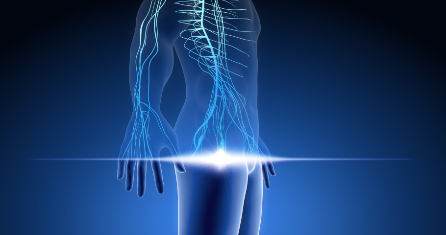 Human nervous system, central nervous system, neurons in body parts, human scan 3D render   Shutterstock HD Video #1059542909