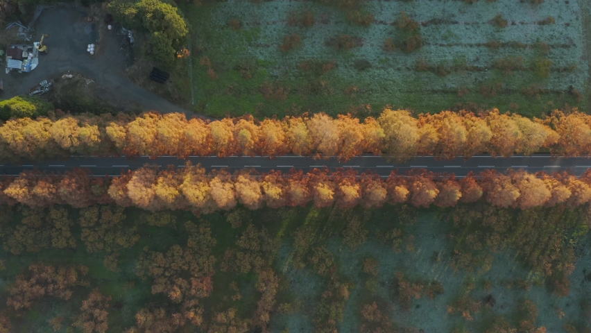 Metasequoia Namiki Top down view as Cars travel on Rural Japan Road.   Shutterstock HD Video #1059561884