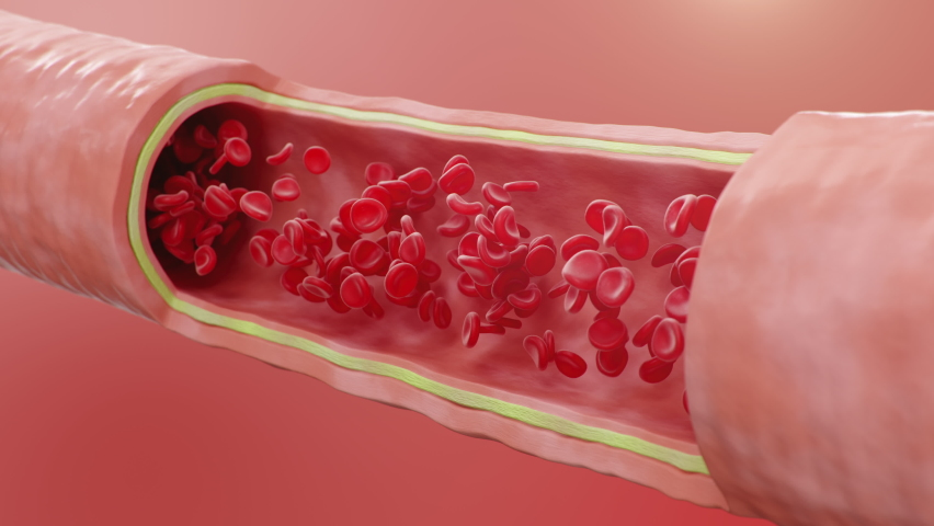 Red blood cells flow inside an artery, cross section artery view. Healthy blood flow. Medical scientific concept. Transfer of important elements into the blood to protect the body, 3d Animation