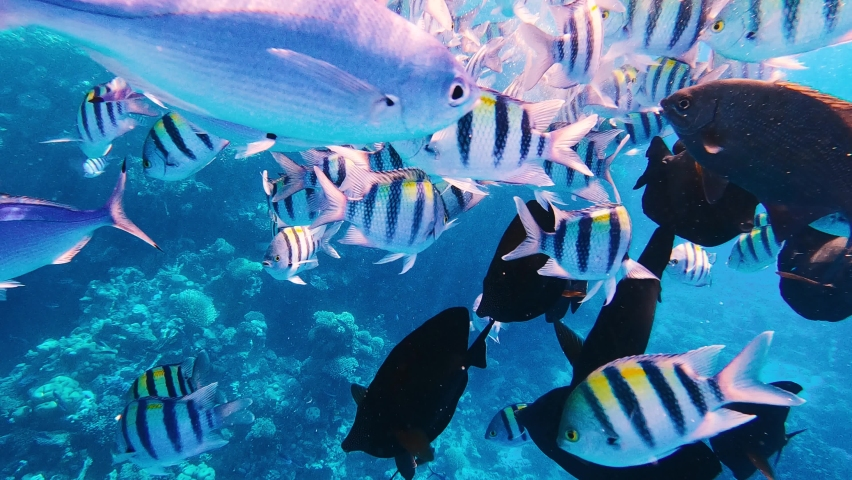 Underwater colorful tropical fishes at coral reef | Shutterstock HD Video #1059577742