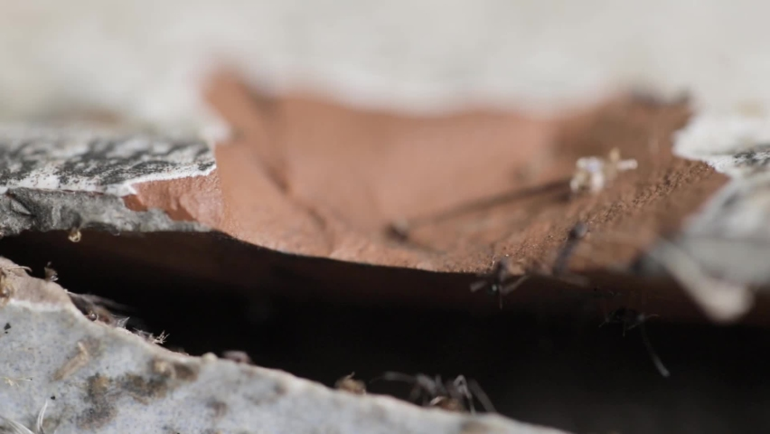 Closeup black ants walk inside and walk outside on it concrete house. House of insects. | Shutterstock HD Video #1059579899