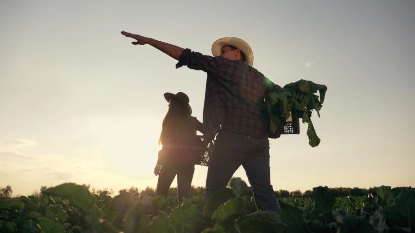 Senior farmer in a green field. Happy cute family in rubber boots in green sugar beet field. Senior farmer in rubber boots with family collects sugar beet. Happy family of father and daughter farmers