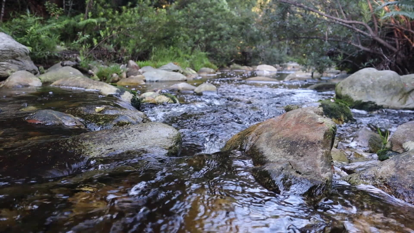 Water flowing through stoney creek in green forest of Knysna, fixed low angle medium shot, real time