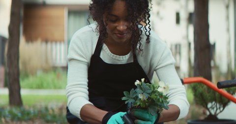 CU Portrait of African-American female planting flowers in the backyard. Hobby concept. Shot on RED Cinema camera with 2x Anamorphic lens