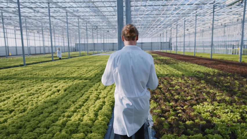 Greenhouse worker in white laboratory coat monitoring irrigation of vegetable plants in hydroponic beds. Modern greenery farm. Eco business. Organic food concept.