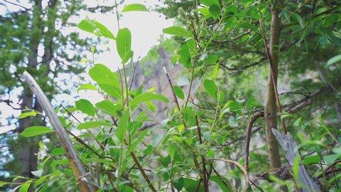 Slow motion breeze through vegitation