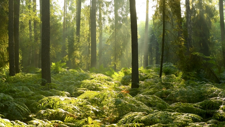 Beautiful morning in the forest - aerial shot | Shutterstock HD Video #1059896375