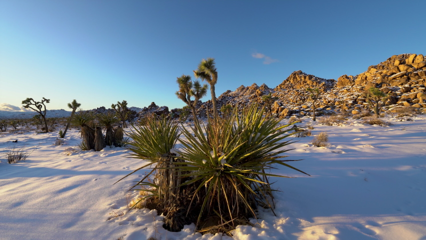 Cinematic tracking shot of snow-covered Joshua Tree National Park in winter