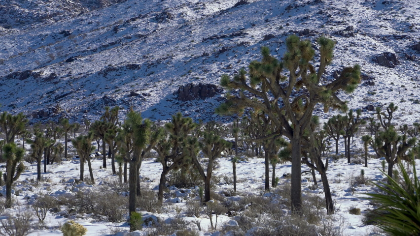 Static shot of snow-covered Joshua Tree National Park in winter