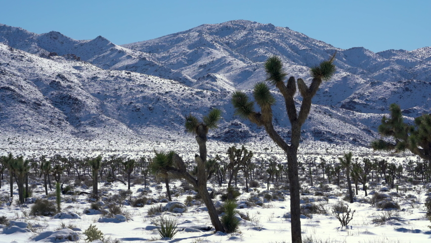 Cinematic pan shot of snow-covered Joshua Tree National Park in winter