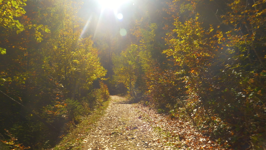 LENS FLARE: Bright autumn sun rays shine on an empty hiking trail crossing the colorful woods turning its leaves. Relaxing hike down a remote path in the tranquil forest on a sunny fall afternoon.