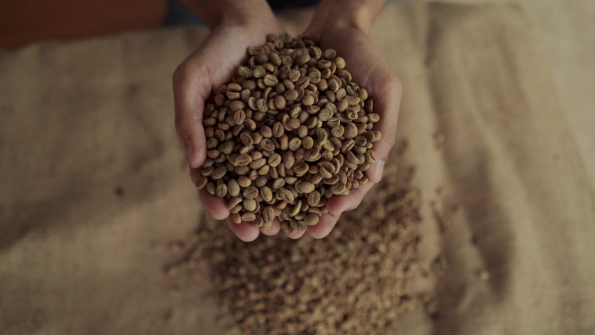 Closeup of hands holding fresh raw green coffee beans. Coffee falls out. Royalty-Free Stock Footage #1059971987
