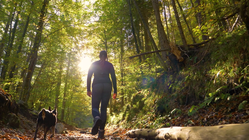 SLOW MOTION LENS FLARE LOW ANGLE: Young woman and her little dog trek down a forest trail offering a scenic view of the trees changing colors. Fit girl takes her miniature pinscher for a walk in woods Royalty-Free Stock Footage #1059977063