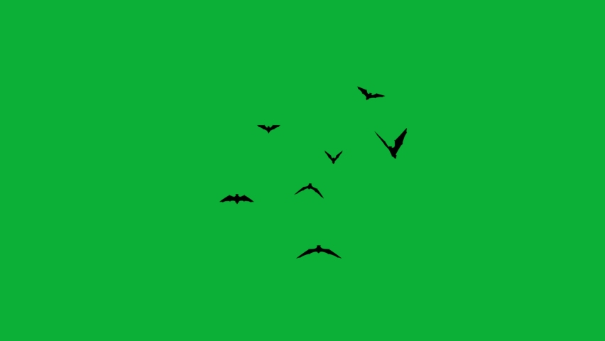 Bats Animation - Halloween Black Bats Flying 4K animation on Green screen background - Flock of Bats flying on Chroma key background