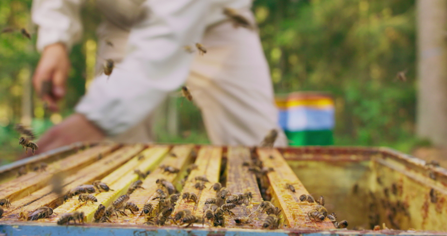 Focused closeup top of the hive without lid, a lot of bees flying and roaming. Beekeeper, staying behind the hive, with bee hive tool in hand, takes the beehive frame out of the hive and inspects it Royalty-Free Stock Footage #1060064684