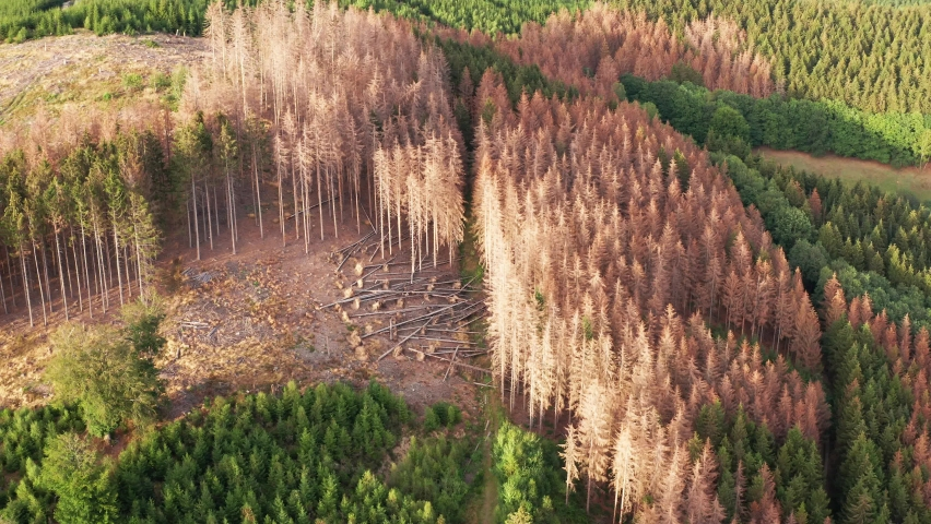 A coniferous forest landscape with dead parts from the top view.  | Shutterstock HD Video #1060097762