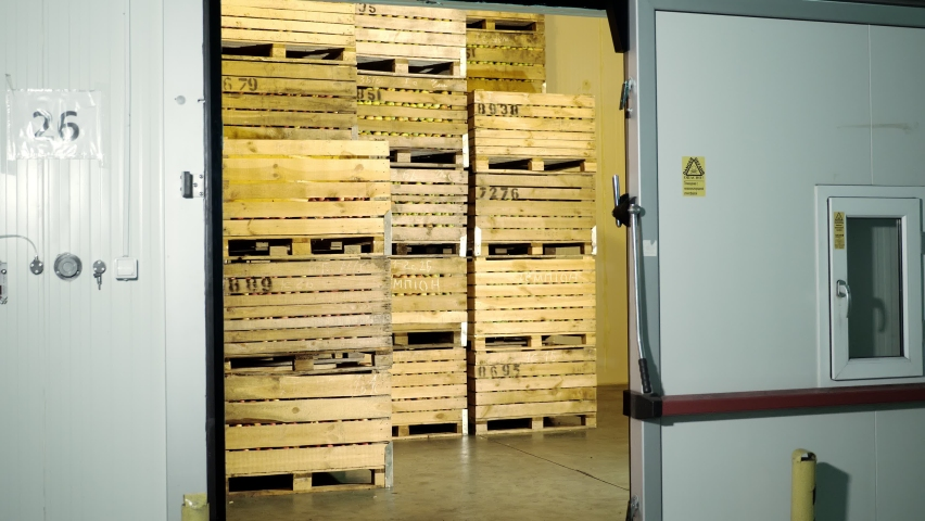 Apple storage. warehouse. stacks of wooden crates with apples in huge airless storage fridge camera, special storage room in warehouse. apple storage technology