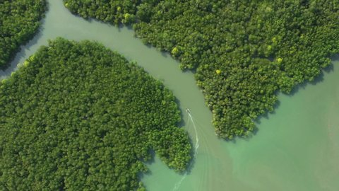 View from above, stunning aerial view of a longtail boat sailing on a river flowing through a green tropical forest. Phang Nga Bay, Phuket, Thailand.