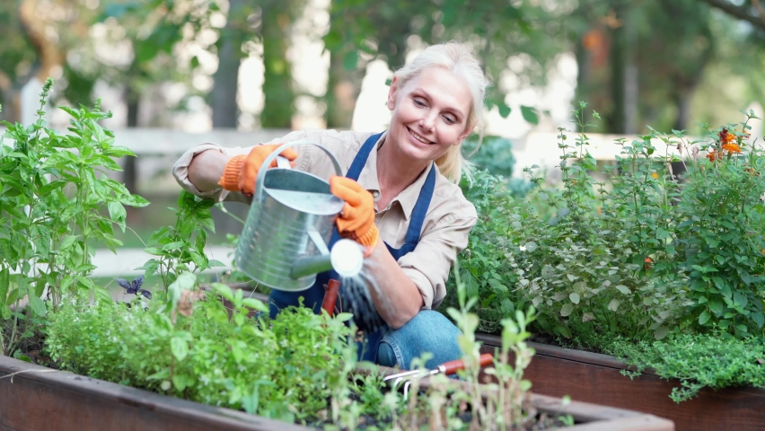 Happy mature woman gardener wearing apron and protective gloves watering flowers or plant and smiling, female farmer enjoying working at her garden | Shutterstock HD Video #1060168076