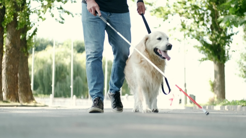 Blind attractive man walking with guide dog in park, good trained golden retriever.