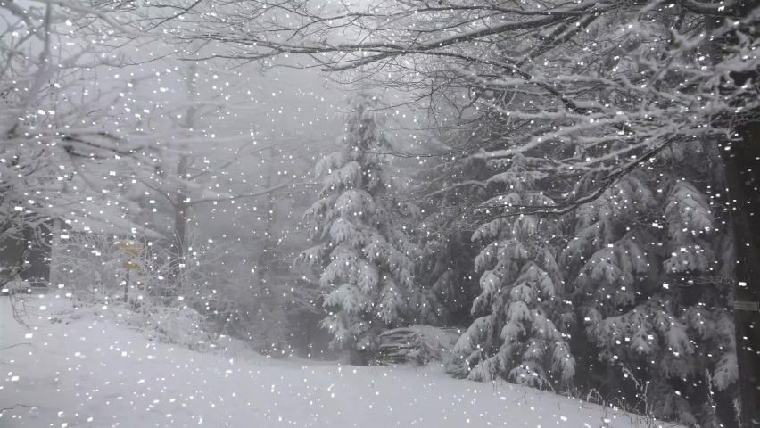 Snowfall in winter in the forest, gentle snowy Christmas morning with falling snow. Winter landscape. Snow-covered trees. | Shutterstock HD Video #1060310315