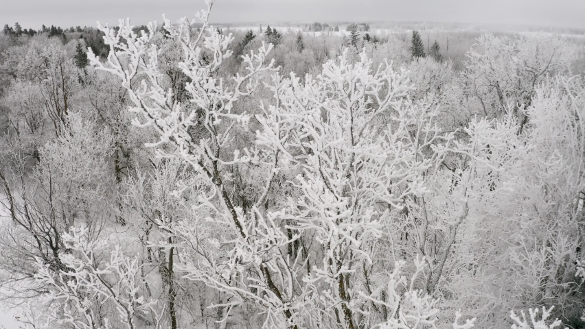 Beautiful hoar frost on the top of a tall poplar tree in the Canadian whiteshell. Winter forest setting in the back ground. 4k | Shutterstock HD Video #1060329647