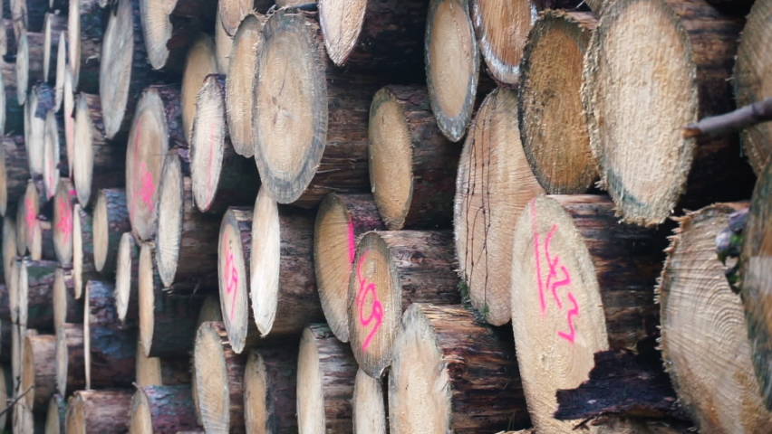 Timber industry. Logs trees are in warehouse. Enterprise for primary processing timber into timber in the logging industry. | Shutterstock HD Video #1060351385