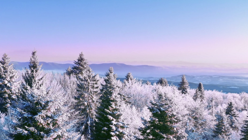Winter Forest Nature Snow Covered Winter Trees Alpine Landscape Early Morning Sunrise Holiday Travel And Tourism Frosty Tree Tops Vibrant Colors Aerial 4k