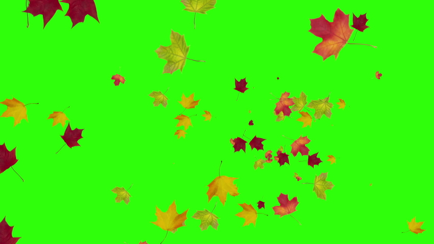 Autumn fall of the maple leaves on a green background. | Shutterstock HD Video #1060433464