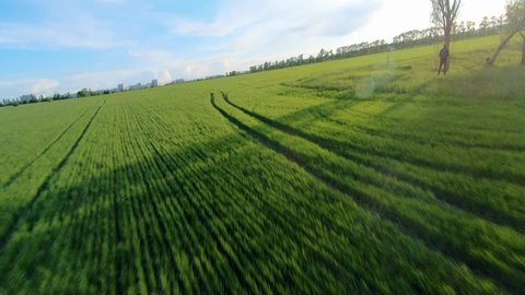 Aerial view of picturesque agricultural field with tractor tracks